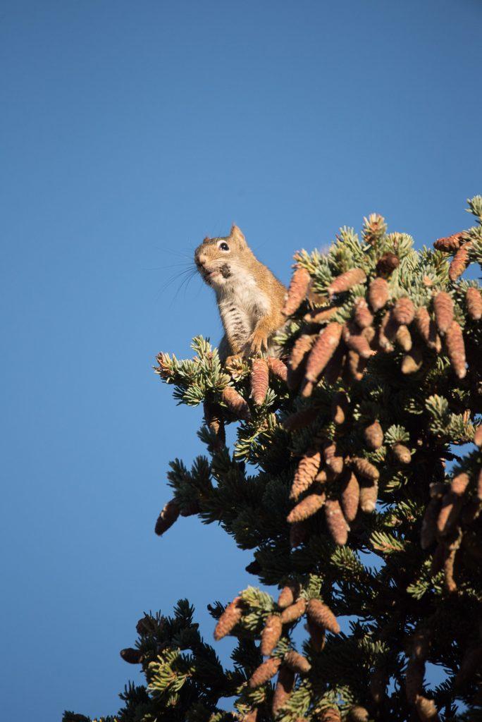Un écureuil en plein boulot
