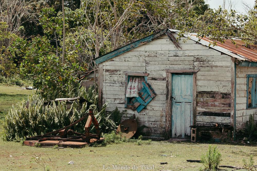 belize creek tree maison