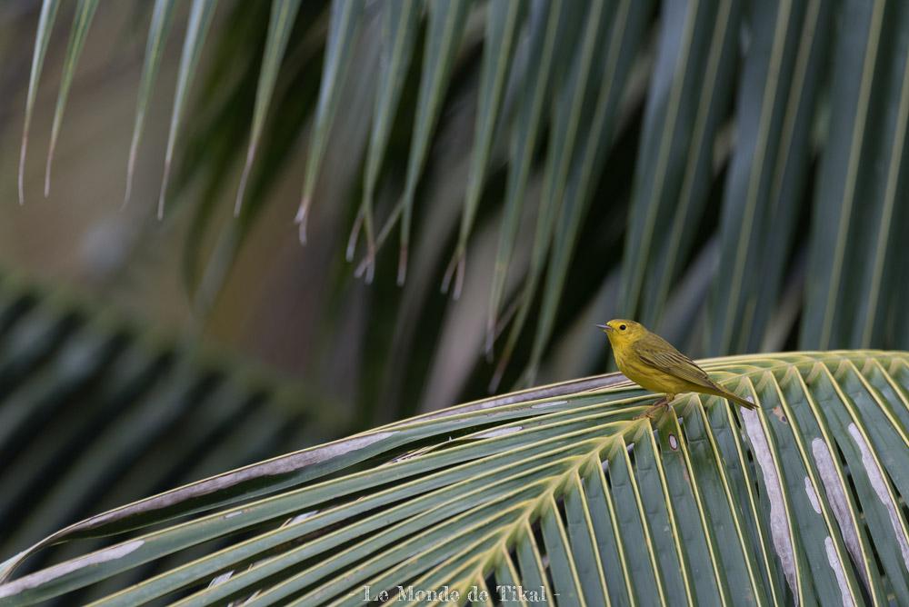 belize creek tree oiseau