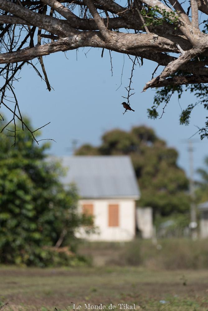 belize creek tree oiseau maison