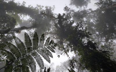 GUATEMALA – De Yaxha au Biotopo del Quetzal, notre quête du Quetzal