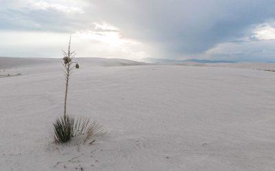 NOUVEAU MEXIQUE – Le désert blanc de White Sands