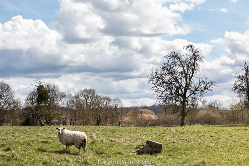 Mouton de Giffaumont-Champaubert