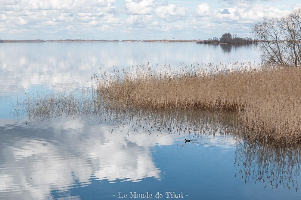 Foulque sur le Lac du Der