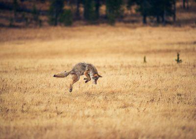 Jump - Yellowstone