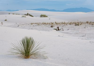 Seul - Texas White Sands
