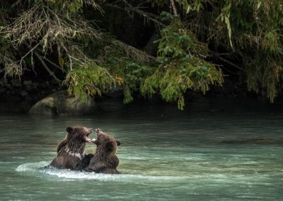 Duel - Alaska