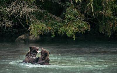 PROJET SAUVAGE – Une histoire sur la faune sauvage et ses protecteurs