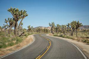 Joshua Tree National Park : visiter l'un des plus beaux parcs de Californie